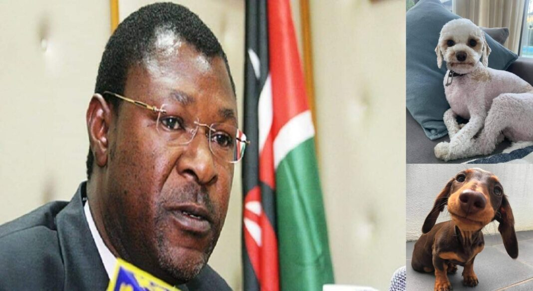 Moses Wetangula Steals Expensive Dogs From A Farmer Before Threatening Him