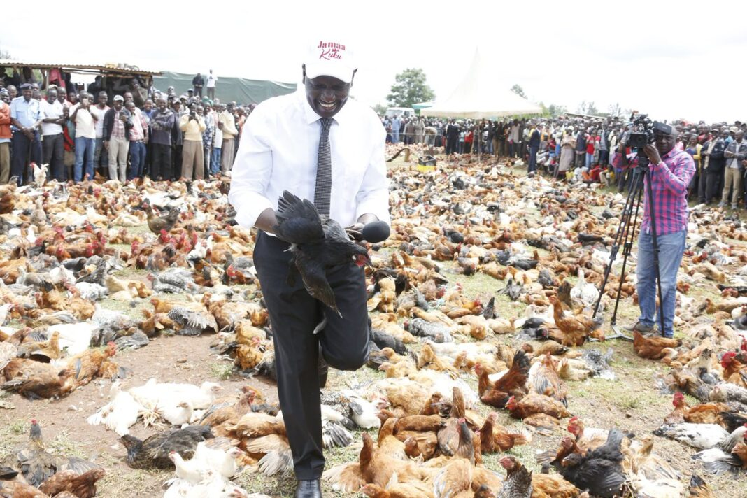 KRA To Go After Ruto Anytime After He Stupidly Bragged He Makes 1.5 Million Daily From Chickens While He's Underpaying The Taxman
